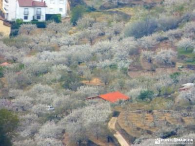 Cerezos flor_Valle del Jerte;sierra cebollera estar en babia sierra de san vicente la cabrera guadal